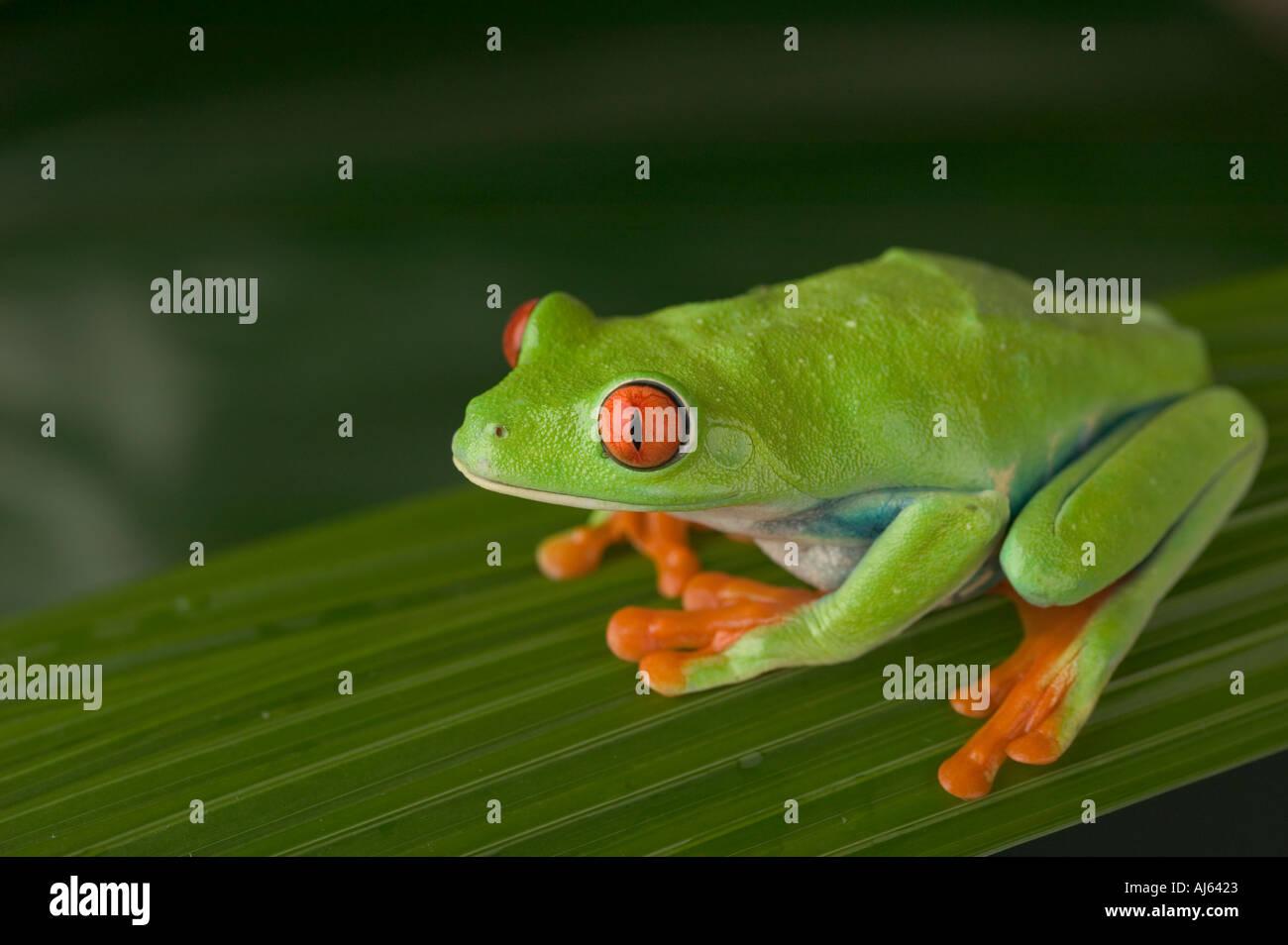 Frog Graphic Imágenes De Stock & Frog Graphic Fotos De Stock - Alamy