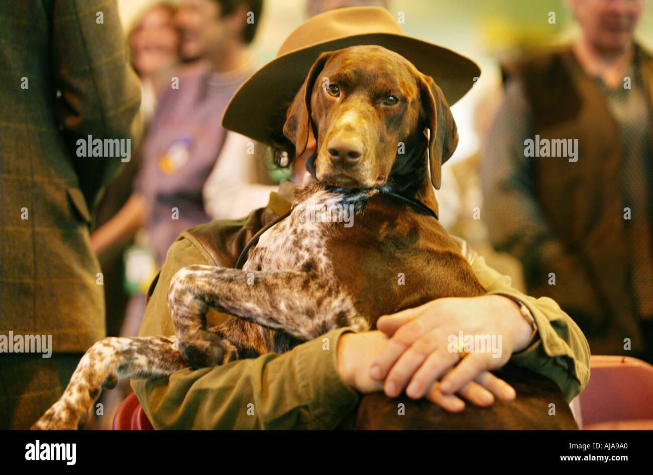 Un perro sentado en su regazo propietarios en Crufts en el National Exhibition Centre Birmingham UK Imagen De Stock