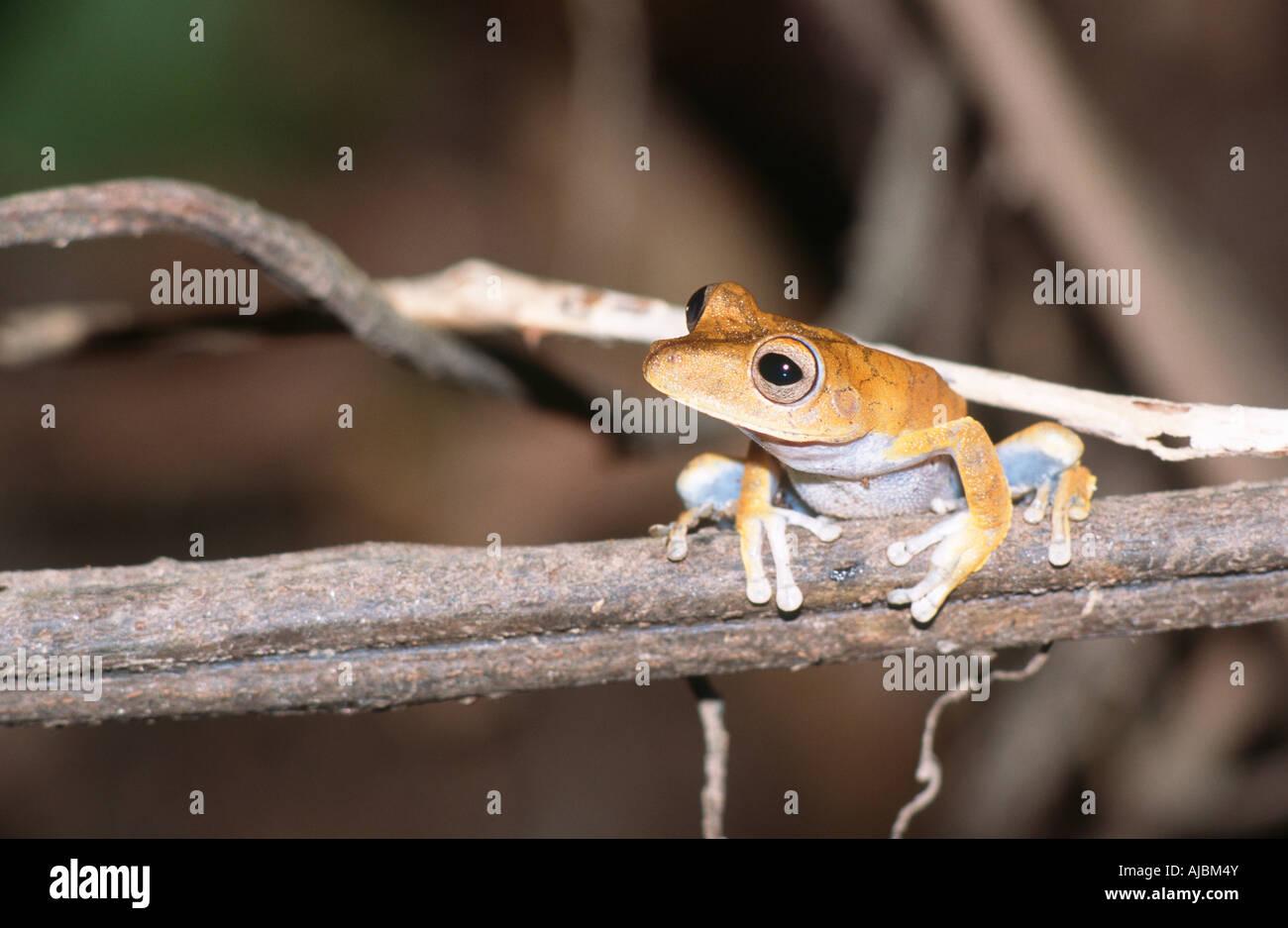 Frog Observation Imágenes De Stock & Frog Observation Fotos De Stock ...