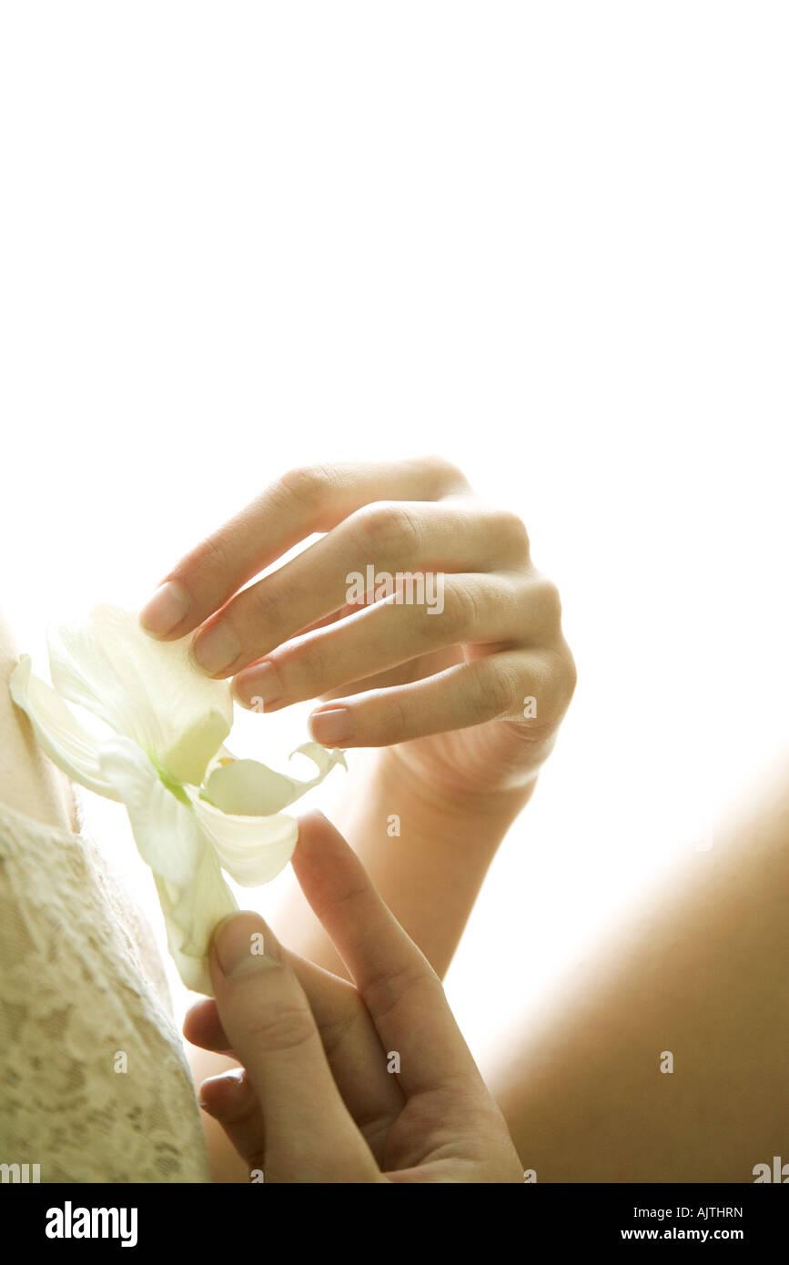 Celebración femenina flor de orquídea, recortadas Imagen De Stock