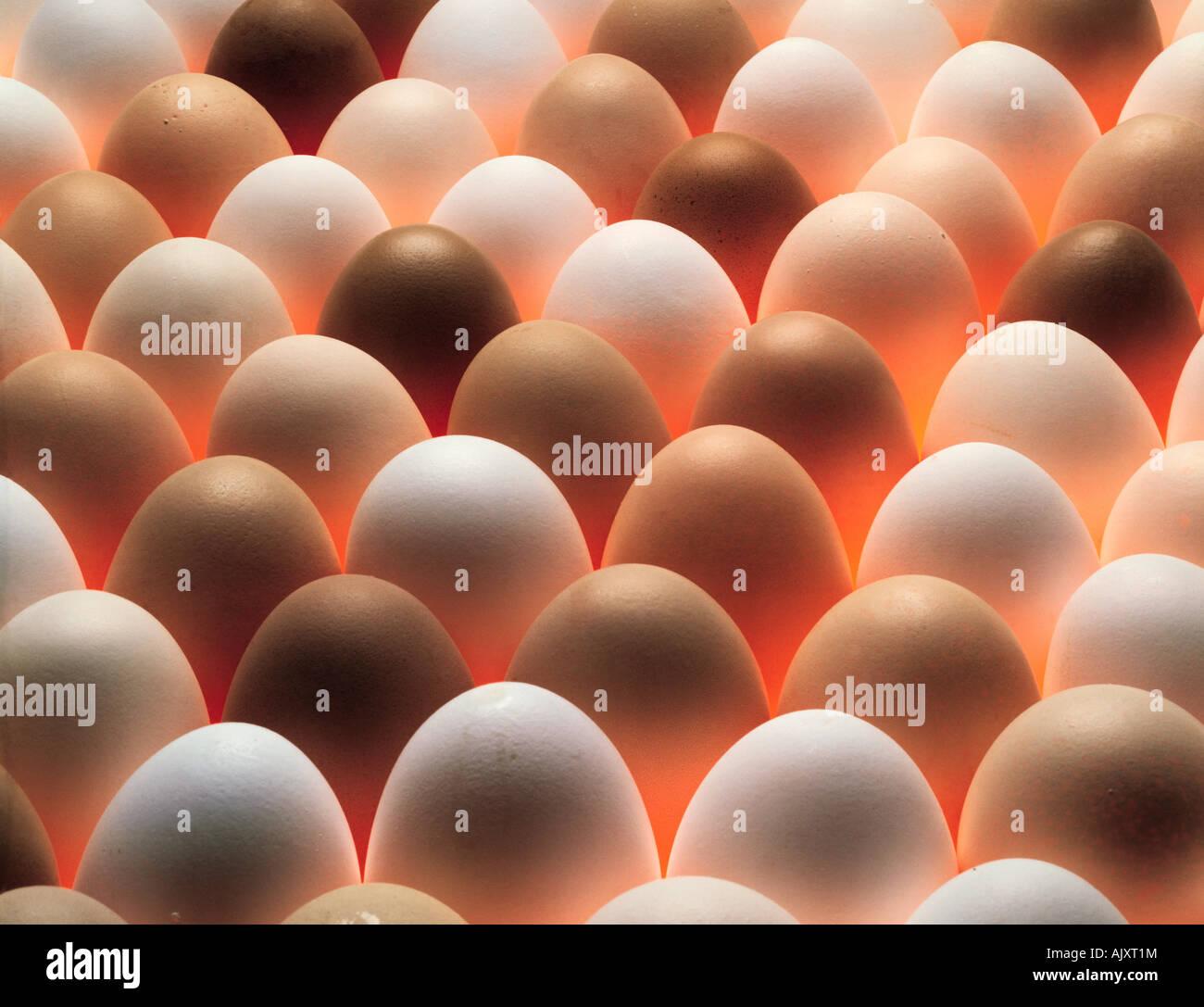 Los alimentos siguen de cerca la vida de los pollos frescos, huevos. Imagen De Stock