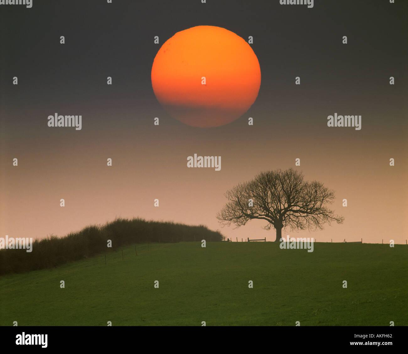 GB - BEDFORDSHIRE: único árbol con Sun cerca de Woburn Imagen De Stock