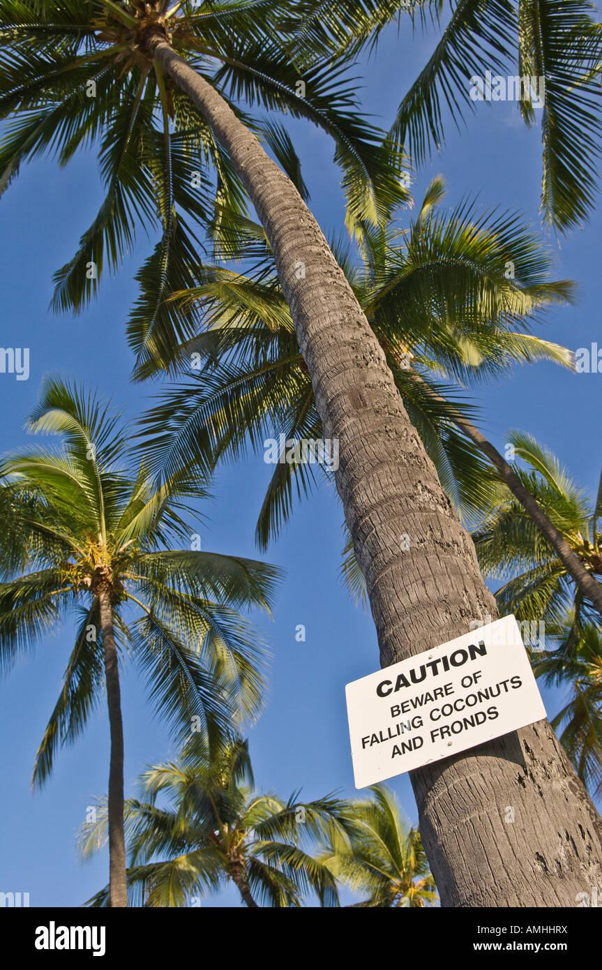 Signo de advertencia sobre la caída de cocos en Palmera en Hale Halewai Park en Kailua Kona Isla de Hawai Imagen De Stock