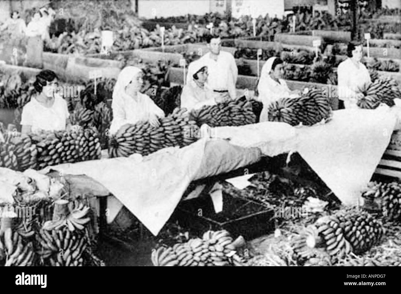 Archive fotografía de una mujer prepara los bananos para exportación. El molino de gofio museo etnográfico en Hermigua, La Gomera. Imagen De Stock