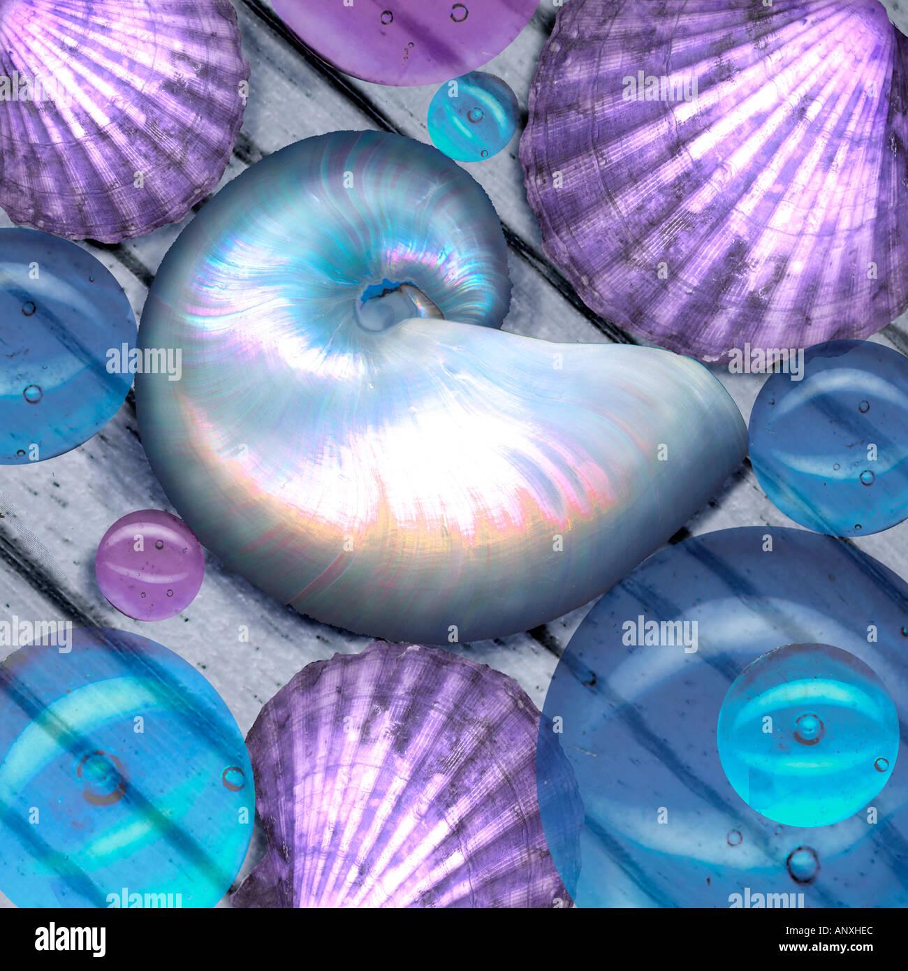 Still life conchas burbujas sobre tablones de madera foto gráfica ilustración nautilus Imagen De Stock