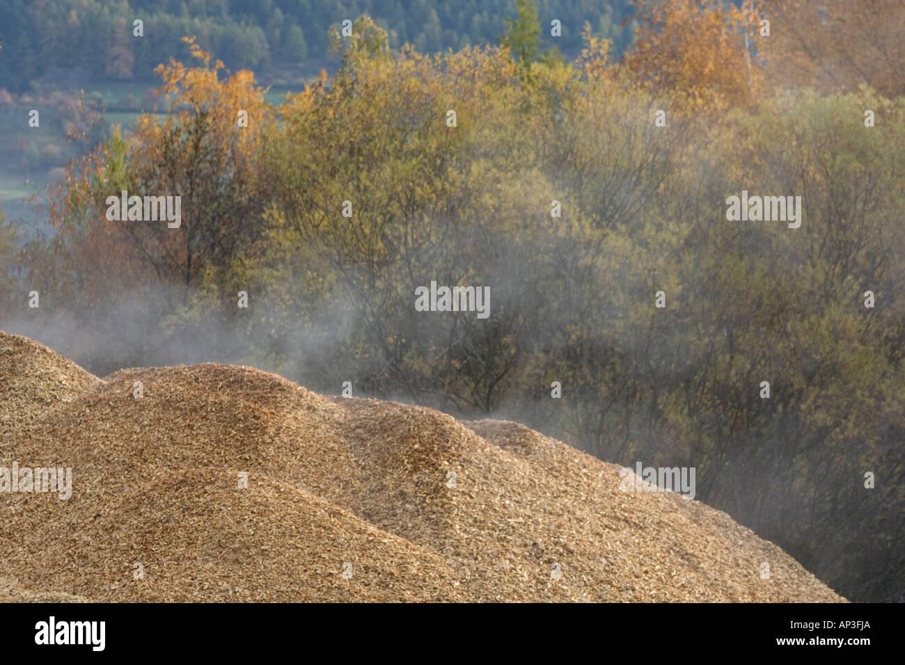 Montón de astillas de madera para re-ciclismo Foto de stock