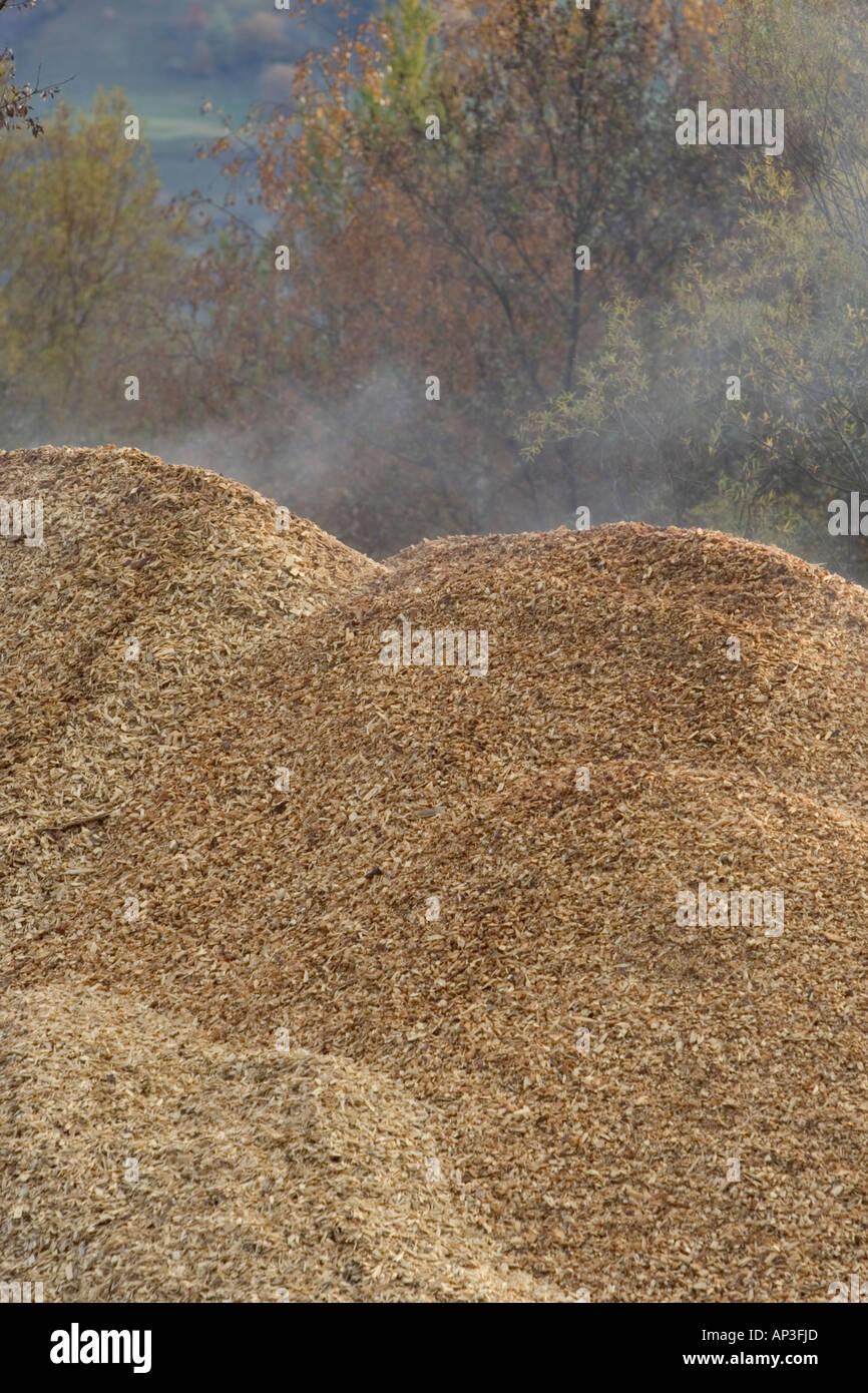 Las enormes pilas de astillas de madera para pasta de papel Foto de stock