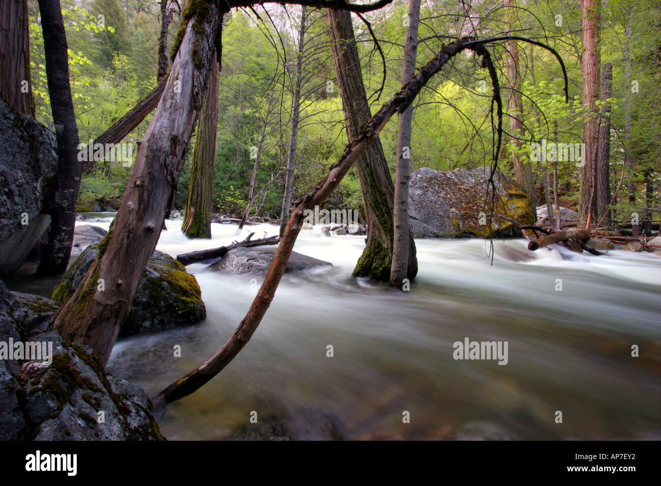 Río Merced, el parque nacional Yosemite Foto de stock