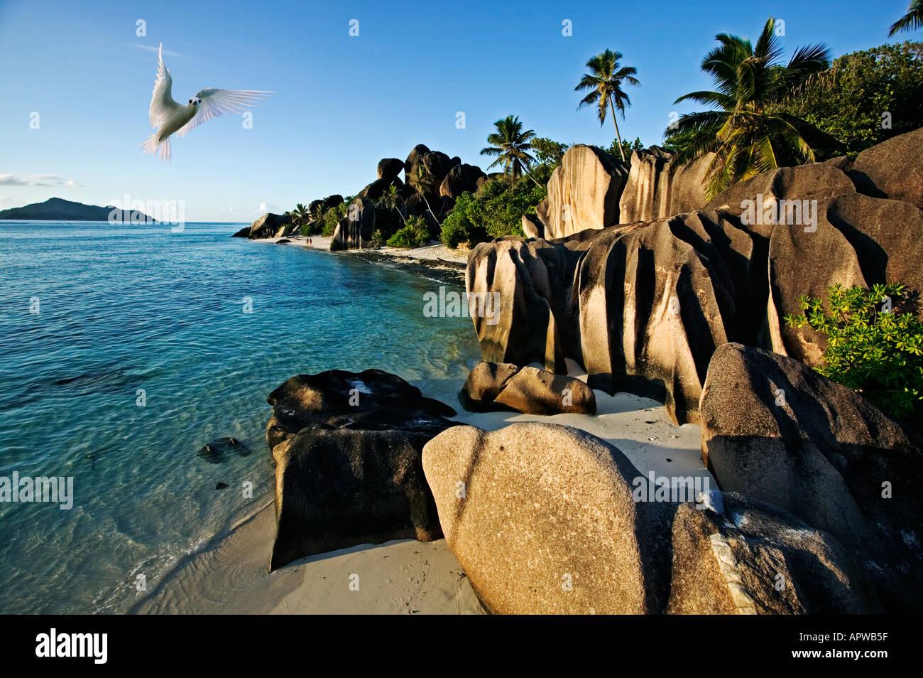Playa Blanca y tern rocas de granito Anse Source D Argent Playa Isla de La Digue Seychelles Imagen De Stock