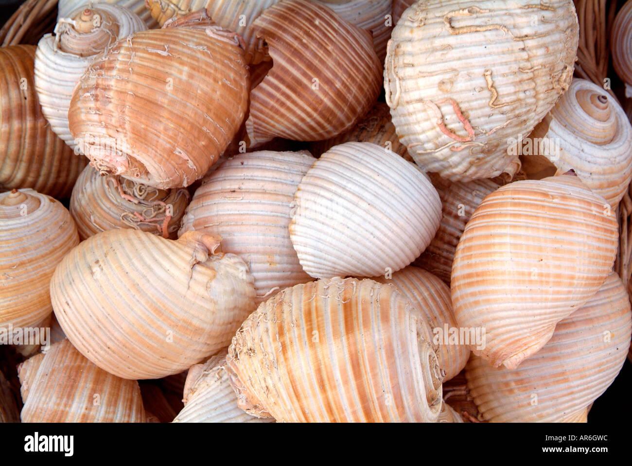 Shell natural calcio espiral difícil recoger buceo agua sal marina semana mercado semanal tienda bazar el comercio en el mercado de vender al por menor Foto de stock