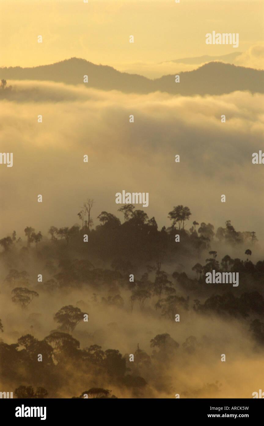 Luz del amanecer las siluetas de los árboles de la selva, el valle Danum, Sabah, isla de Borneo, Malasia Foto de stock