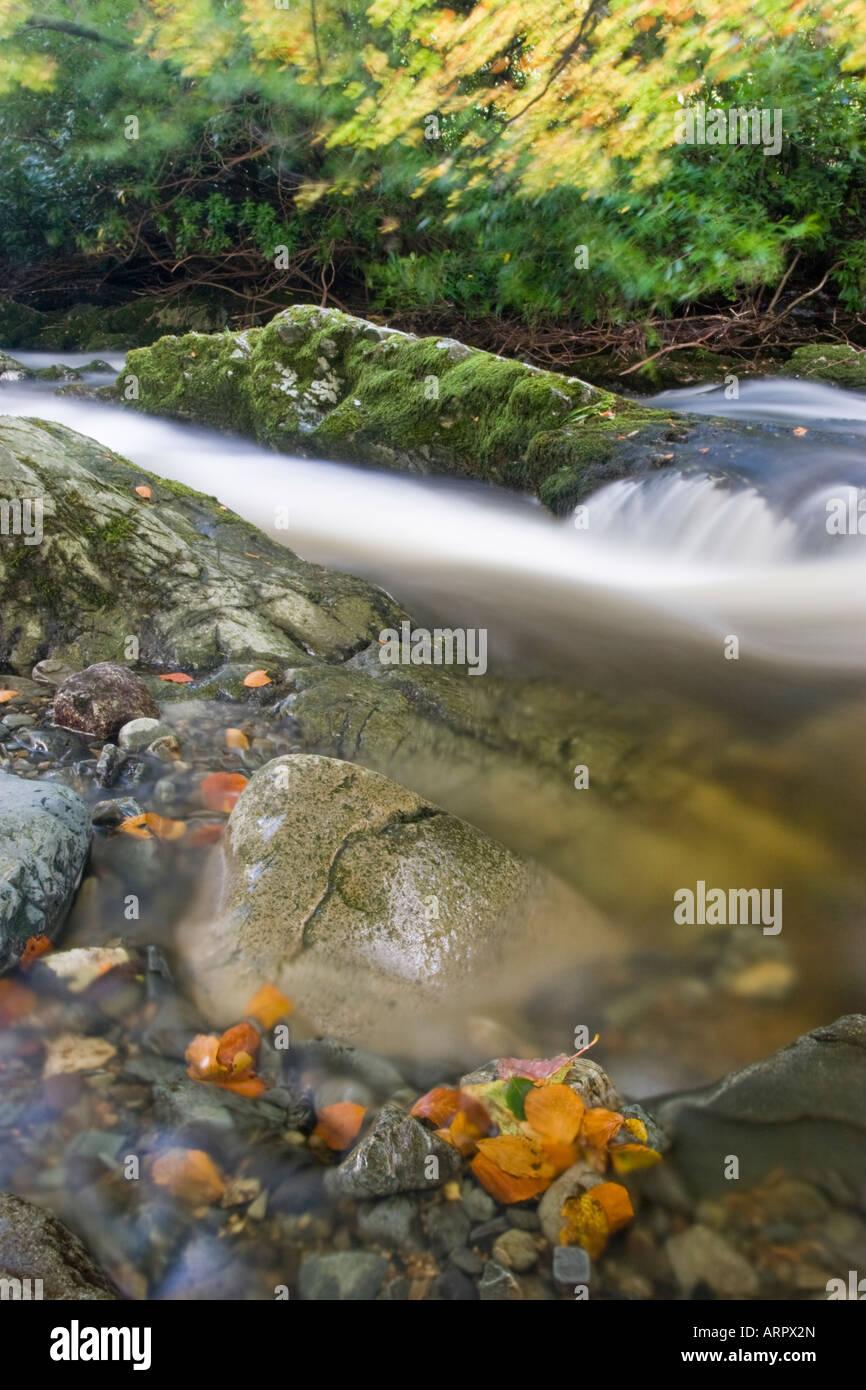 River en el Parque Forestal de Tullymore Foto de stock