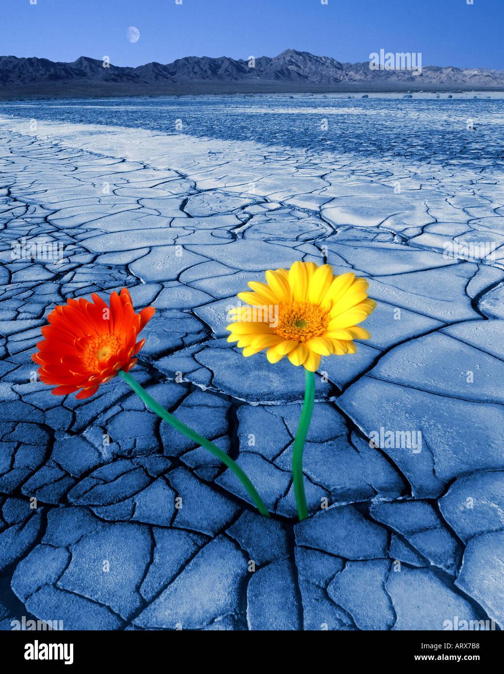 Concepto medioambiental: el desierto Digital Imagen De Stock