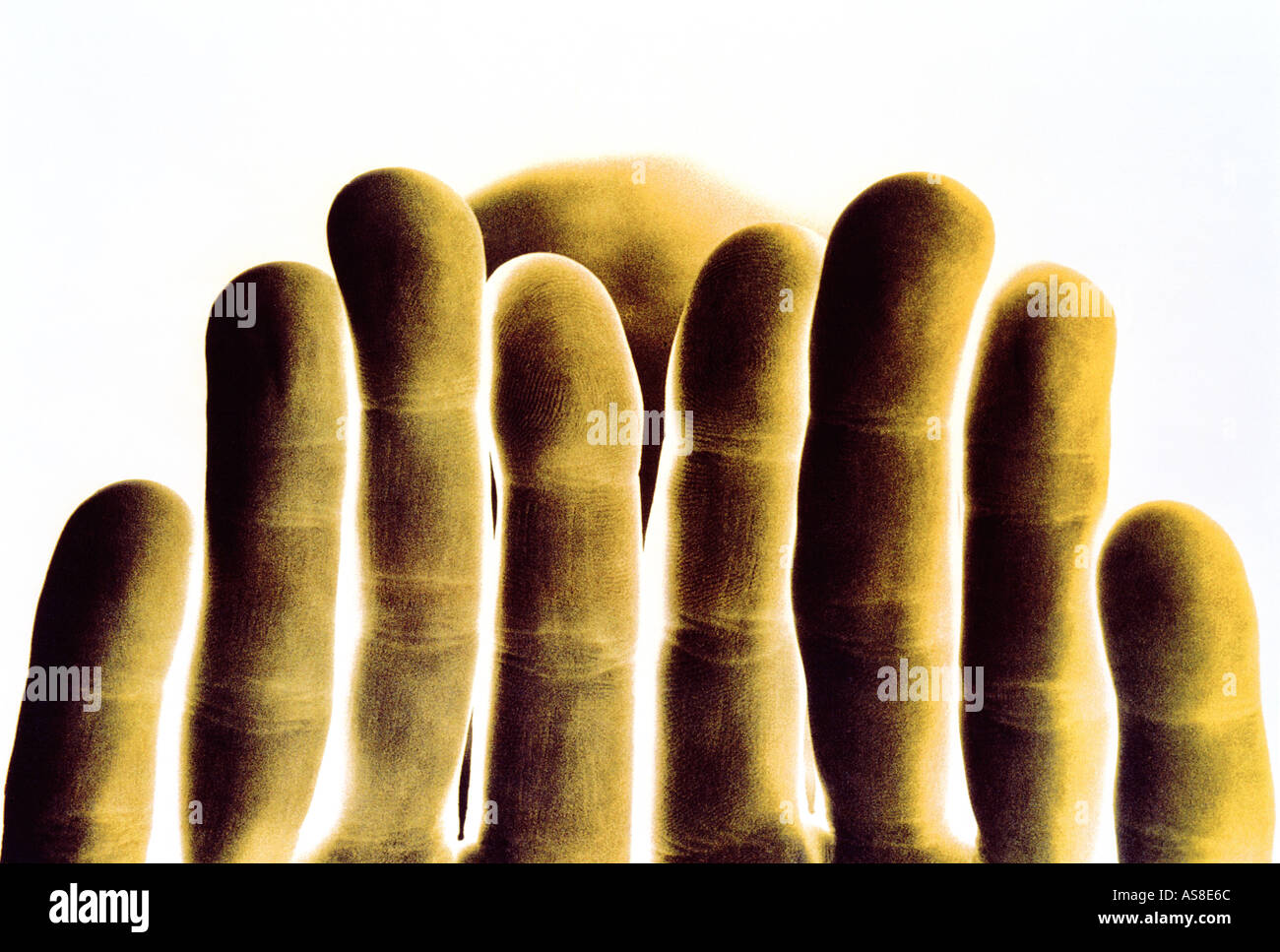 Andy s manos Imagen De Stock