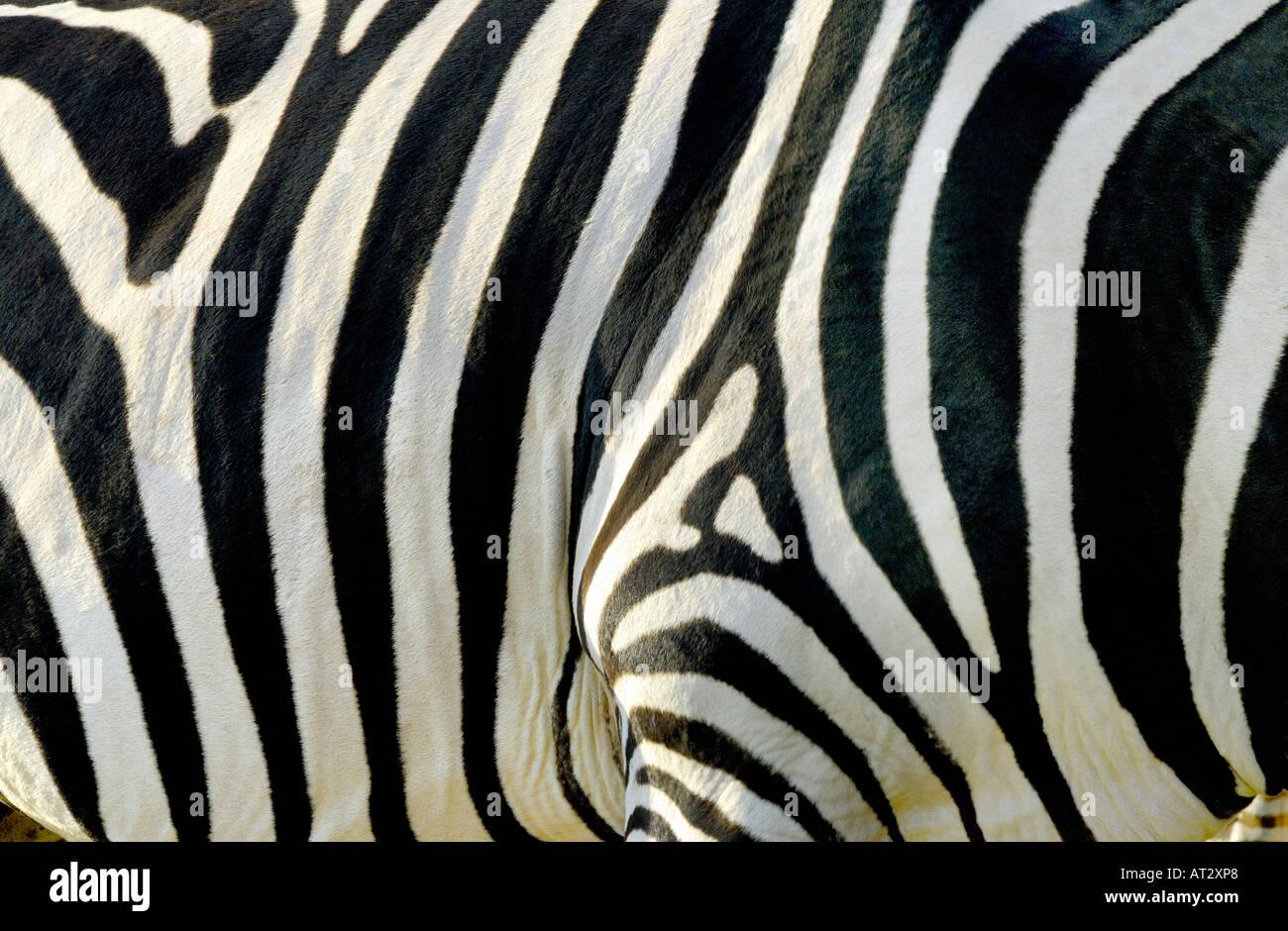 Patrón de rayas de cebra Foto de stock