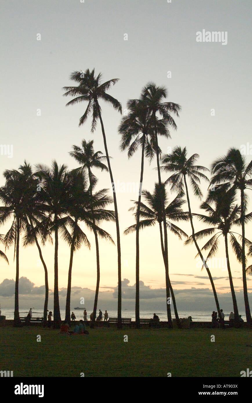 Altas palmeras al atardecer, San Souci beach, también conocido como Kaimana beach, cerca del parque Kapiolani, el Waikiki Foto de stock