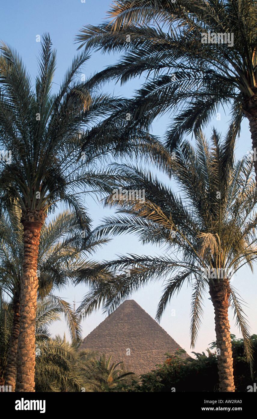 Egipto Gran pirámide enmarcadas por palmeras Foto & Imagen De Stock ...