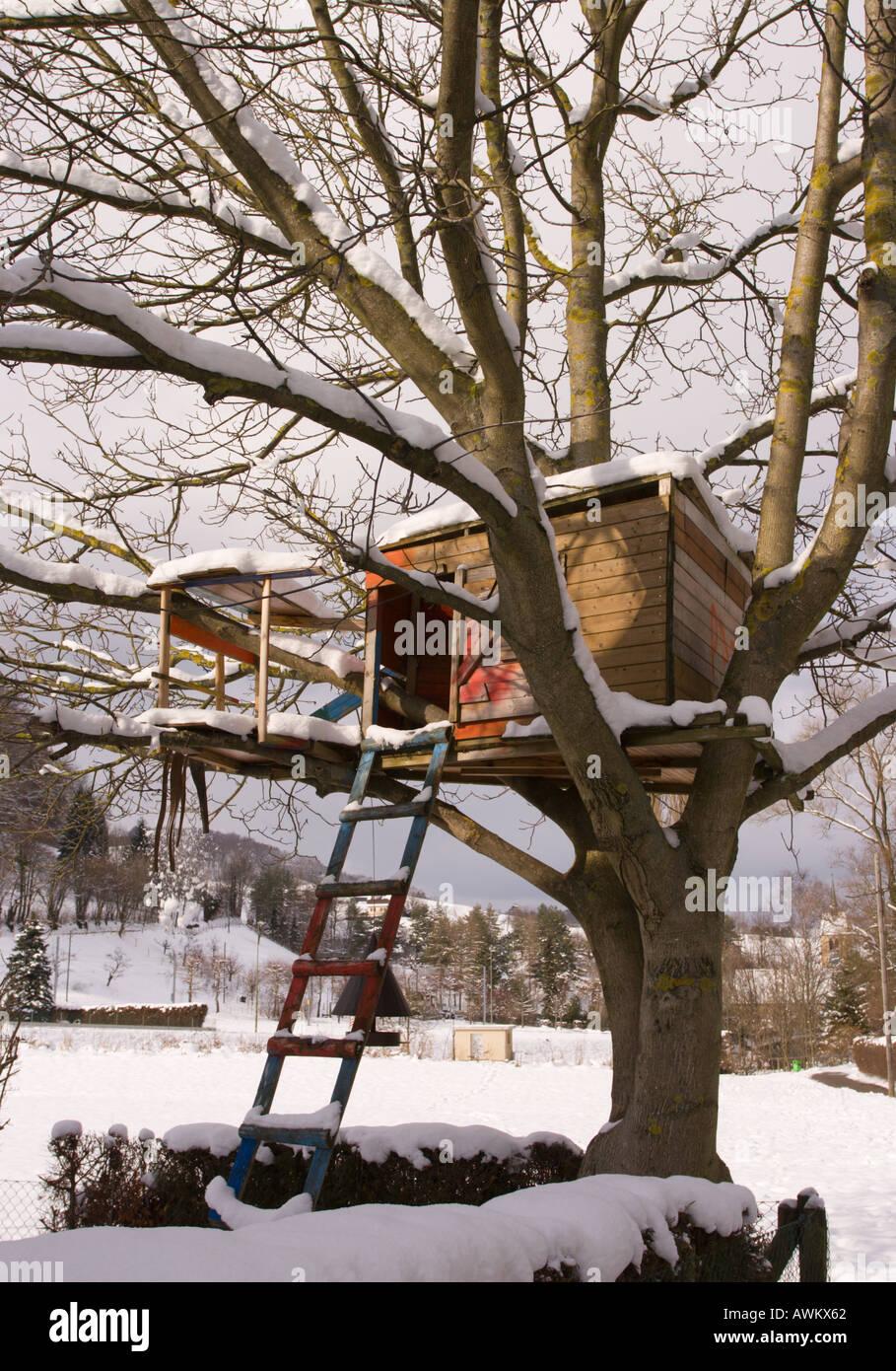 árbol Grande Casa Construida Y Mantenida Por Grandes Ramas