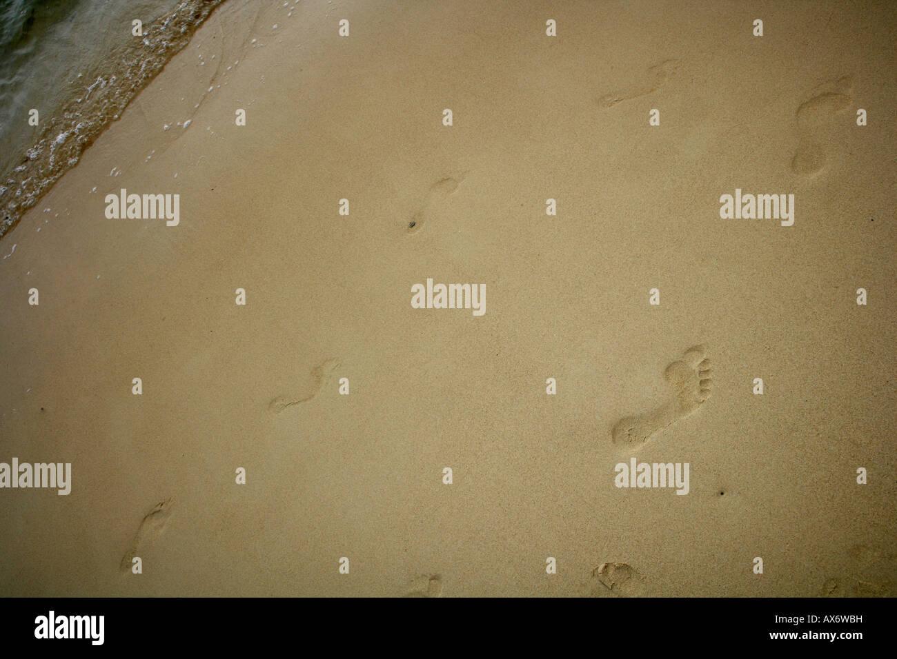 Las pistas en la playa. Imagen De Stock