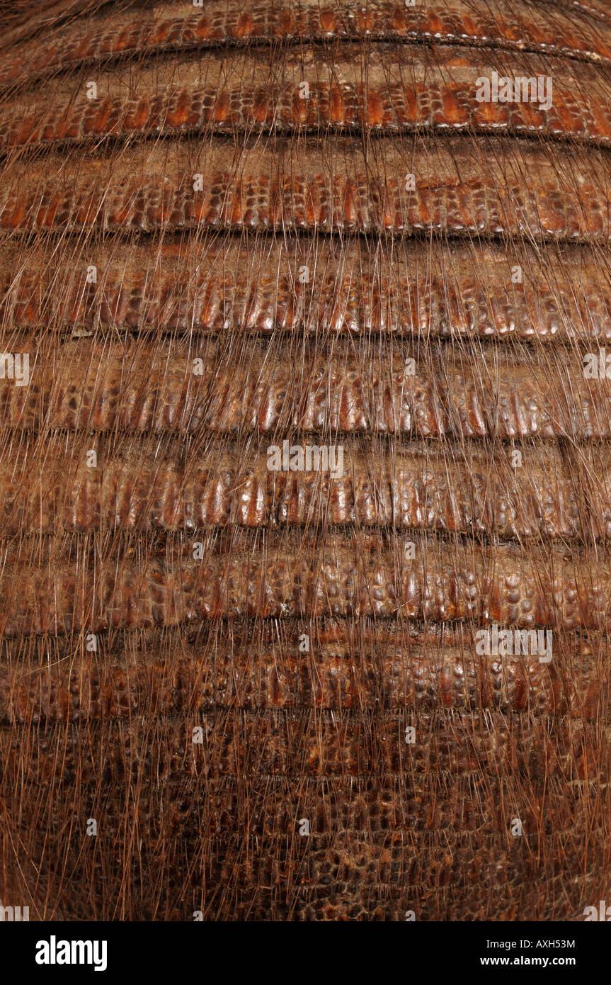 Taxidermia armadillo shell Imagen De Stock