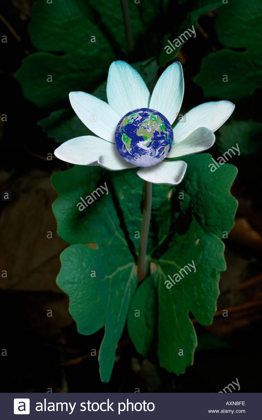 Planeta Tierra en un wildflower Imagen De Stock