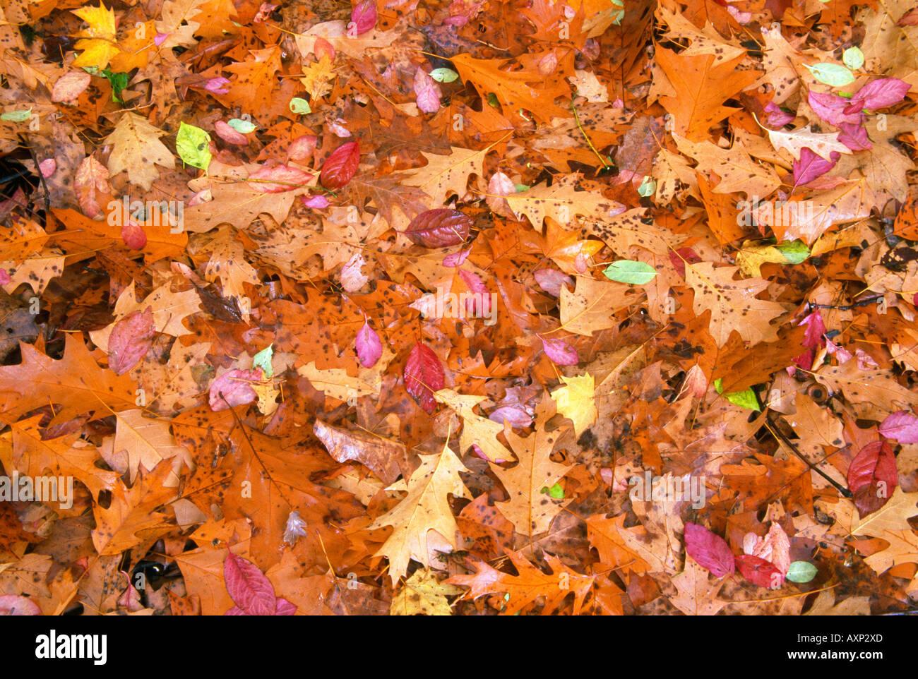 Hojas de otoño Imagen De Stock