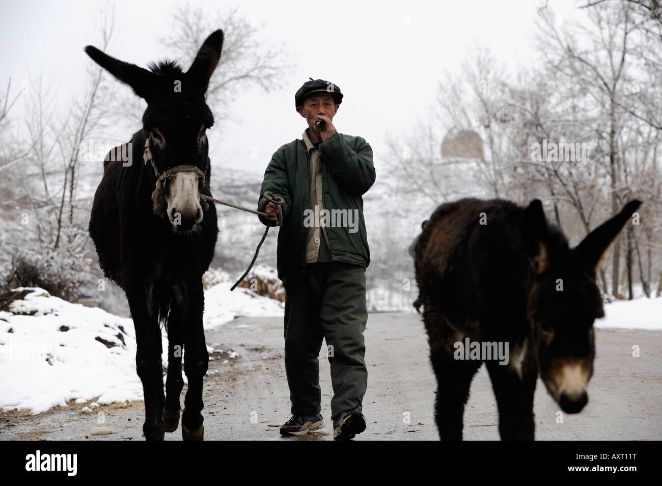 Un agricultor impulsa dos burros en el condado de Chicheng, provincia de Hebei, China. 28-Mar-2008 Imagen De Stock