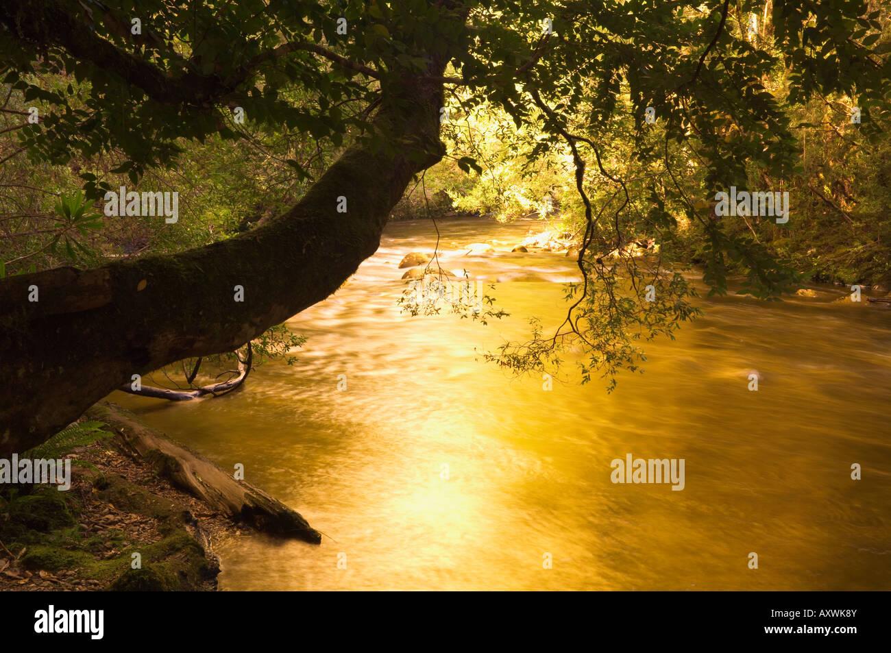 Franklin River, Parque Nacional Franklin-Gordon Wild Rivers, Tasmania, Australia, el Pacífico Imagen De Stock