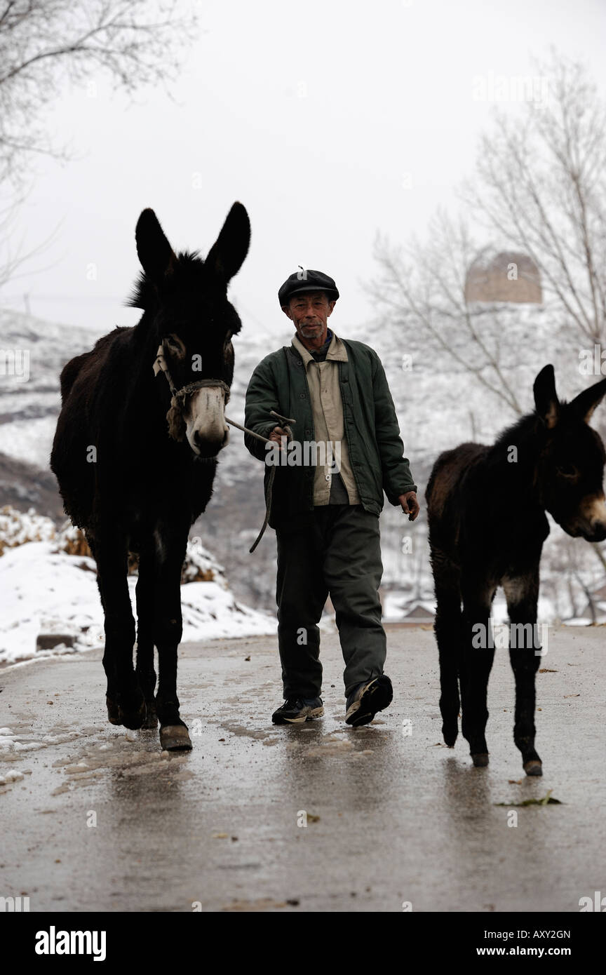 Un agricultor duros burro en el condado de Chicheng, provincia de Hebei, China. 28-Mar-2008 Imagen De Stock