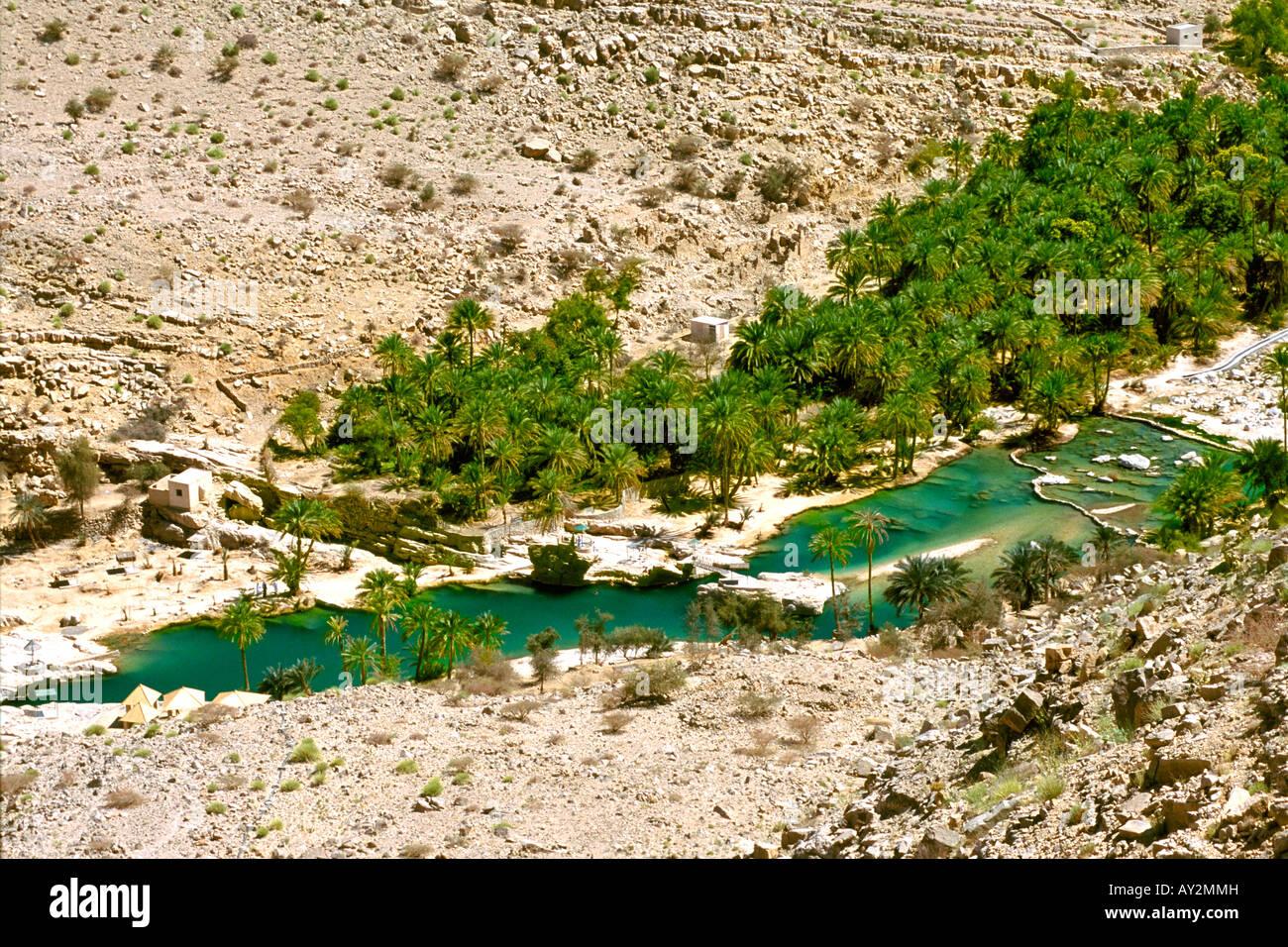 Las palmeras datileras y piscinas de roca de Wadi Bani khalid en las montañas Hajar oriental de Omán. Imagen De Stock