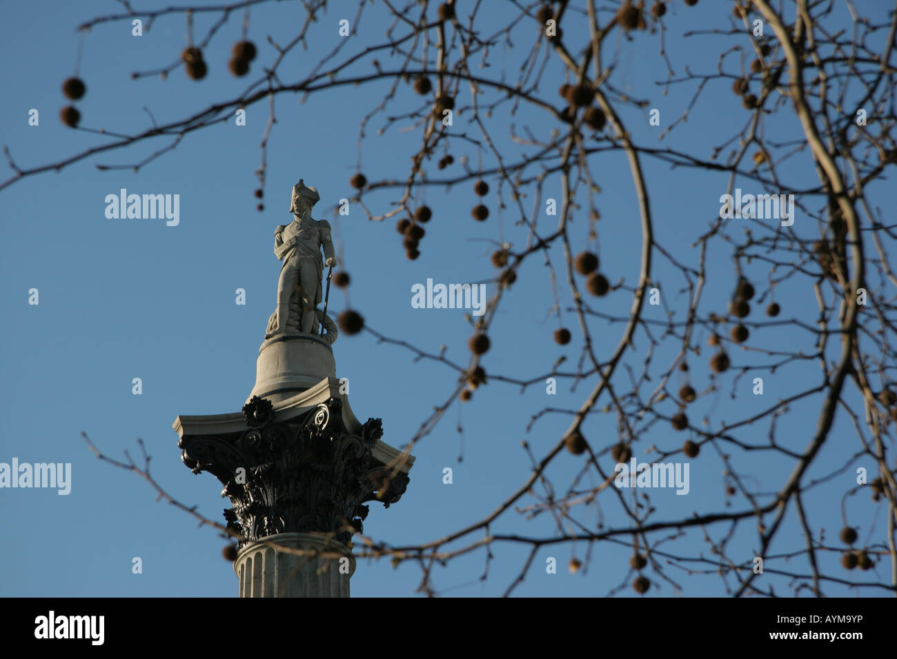Columna de Nelson en Trafalgar Square, Londres, visto a través de las llanuras de Londres las ramas de un árbol Imagen De Stock