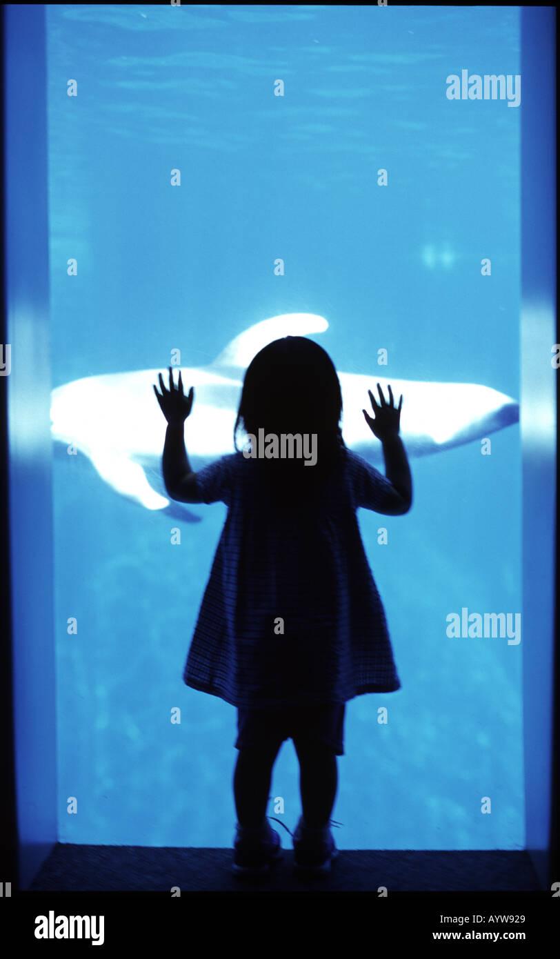 Silueta de una chica viendo un pez de vidrio aqualium Foto de stock