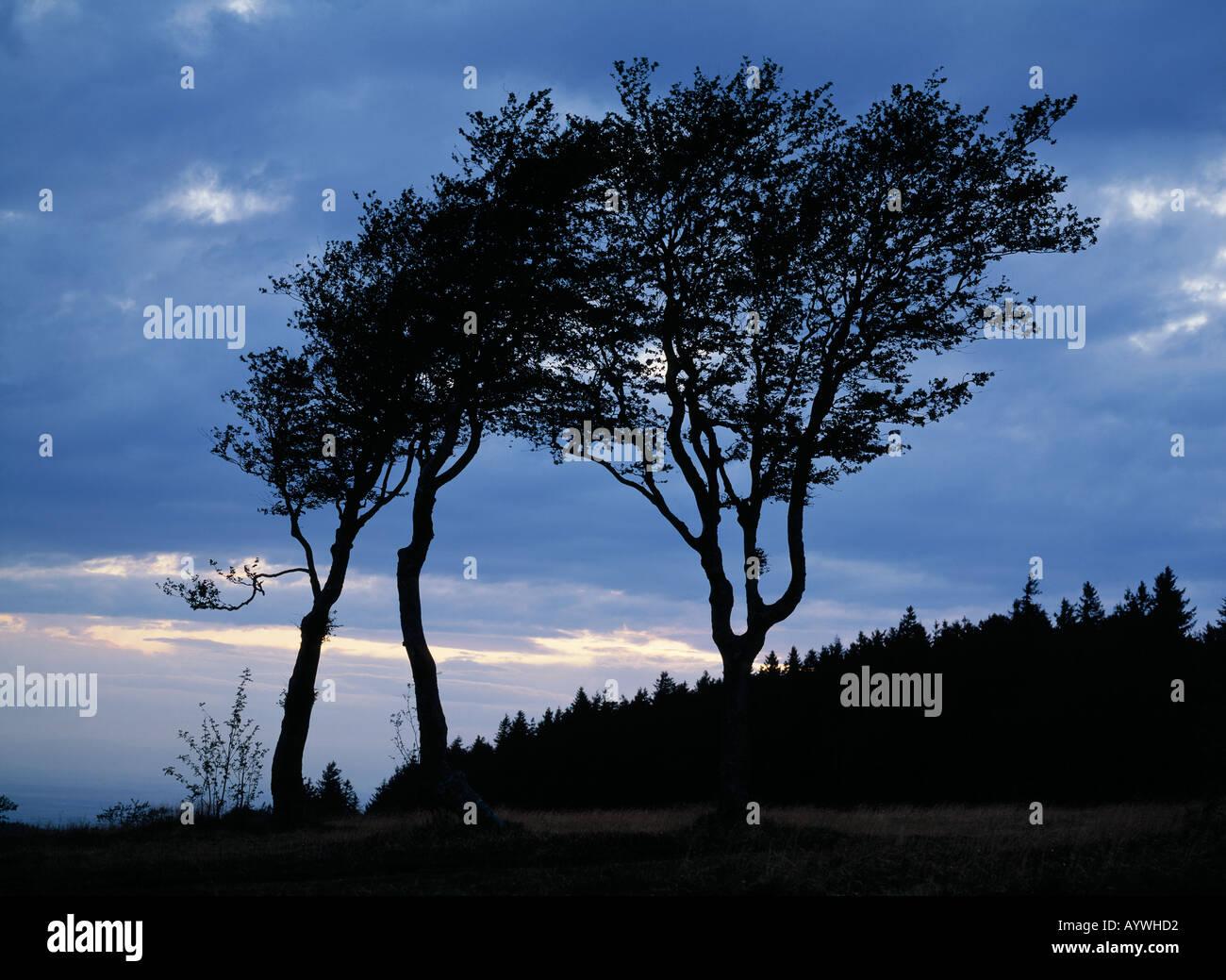 Auf dem Abendstimmung Abenddaemmerung, Schauinsland, im Wetterbuchen Gegenlicht als silueta, Freiburg Breisgau, Foto de stock