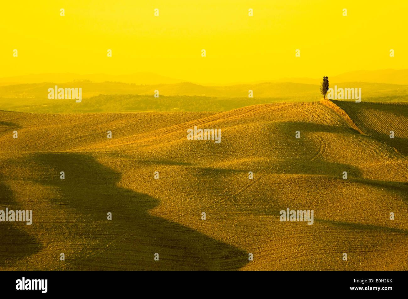 Ciprés solitario en la colina típico paisaje toscano Foto de stock