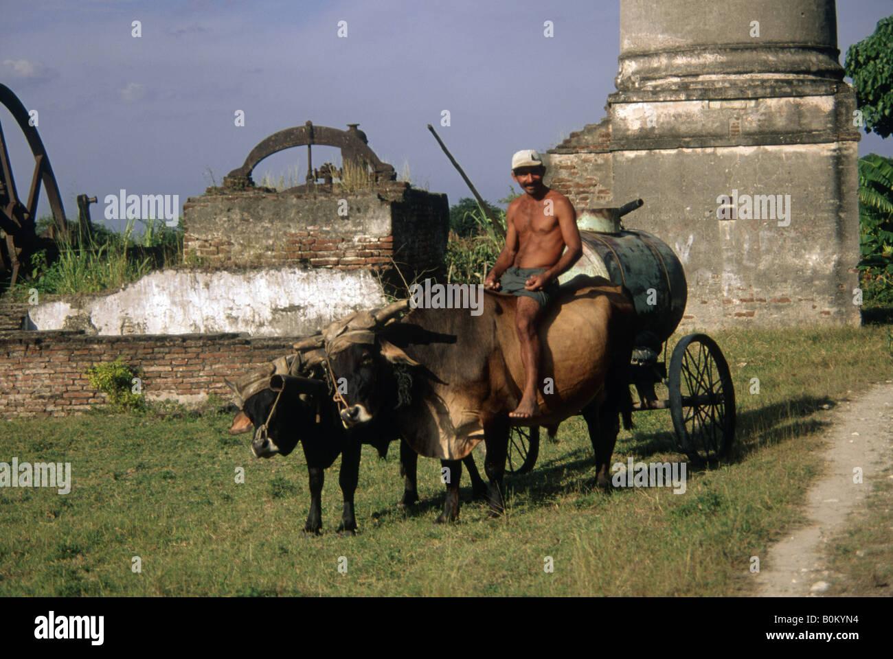 Guaimaro. Amigo Uboldo. Hombre sentado en la parte trasera de Buffalo. Detrás del carro. La hierba. Imagen De Stock