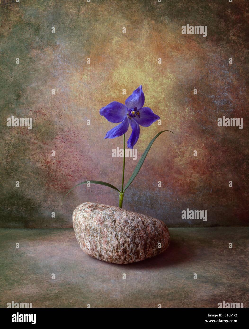 6 de una serie de retratos en formato de imagen de color lila esta es del flor en un jarrón sobre un fondo Imagen De Stock