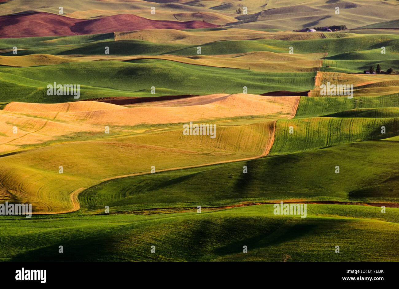 Campos Palouse, Whitman County, Washington (EE.UU. Imagen De Stock