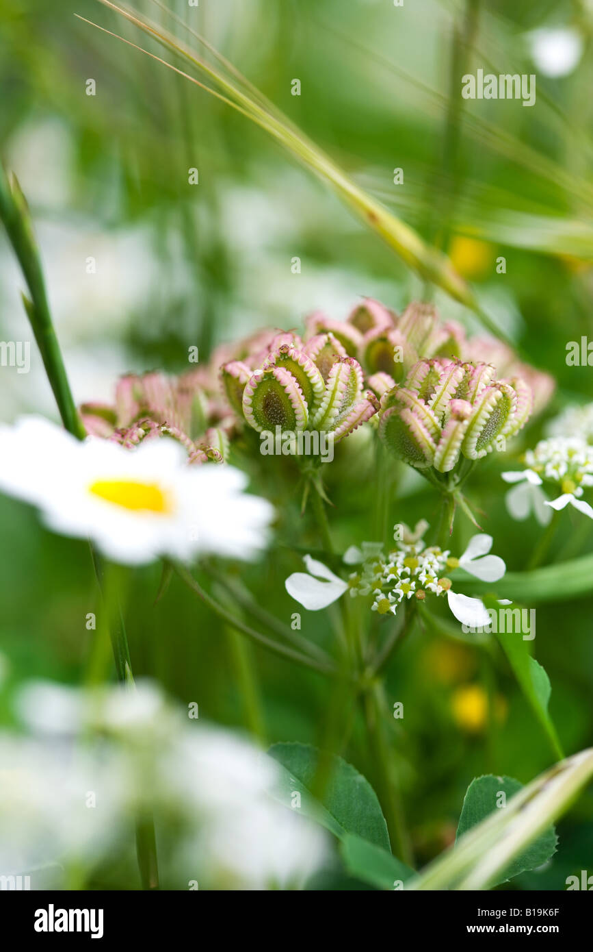 Flores silvestres, close-up Foto de stock