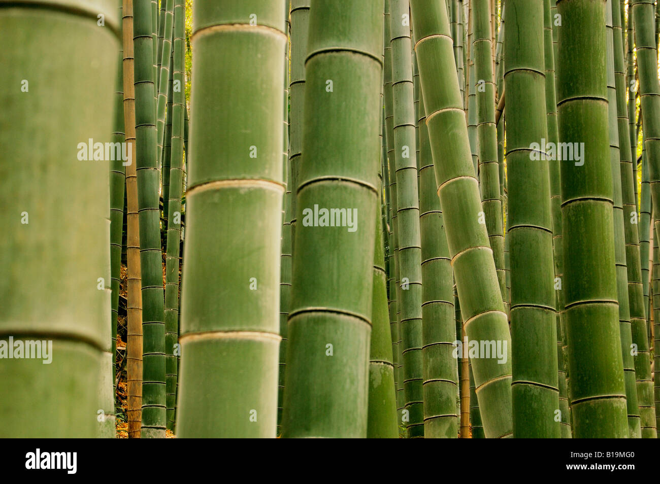 Bosque de bambú de Japón Kioto Imagen De Stock