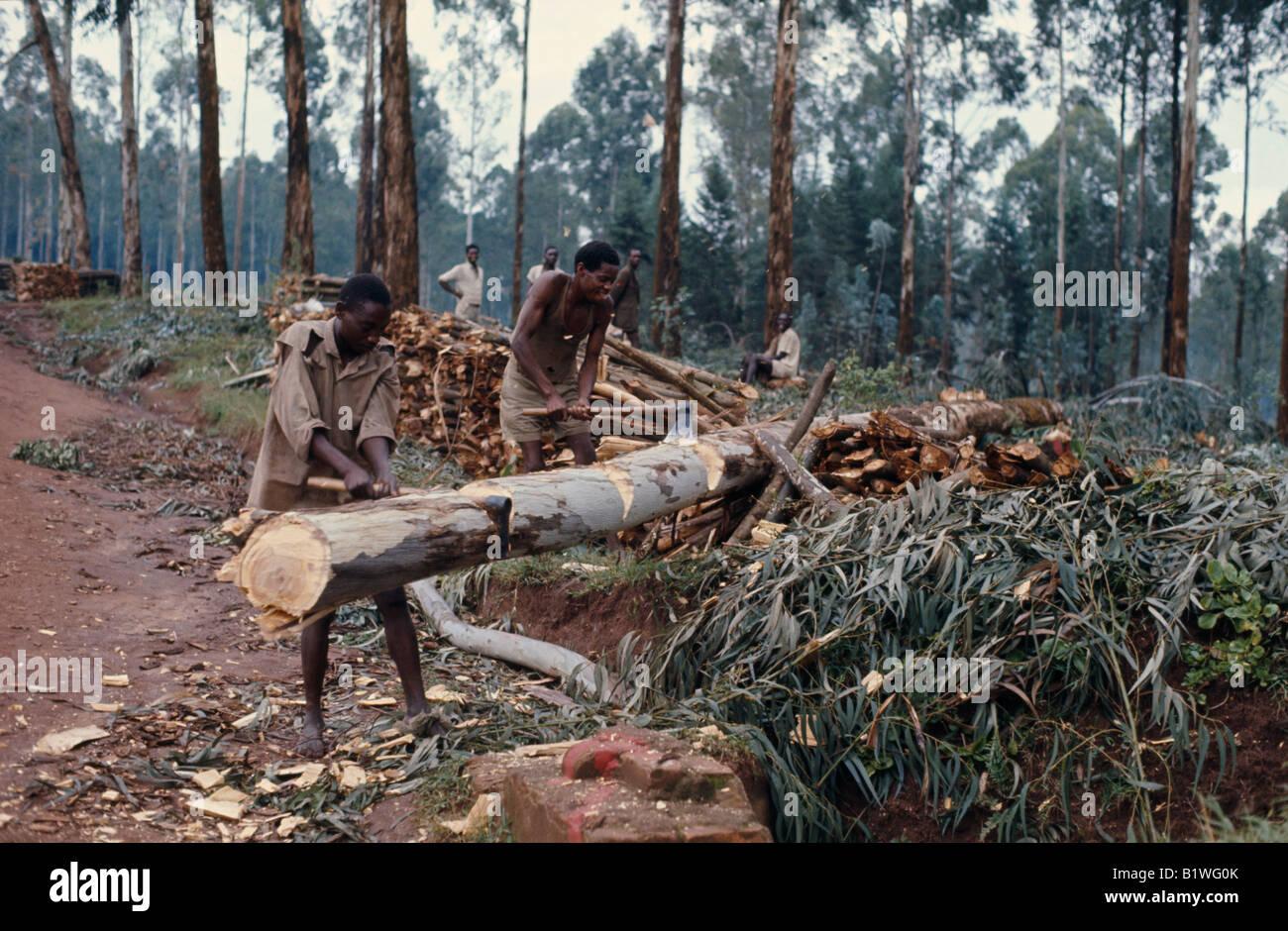 África Oriental Central de Rwanda medio ambiente Deforestación tala de árboles hombres talando árboles Imagen De Stock