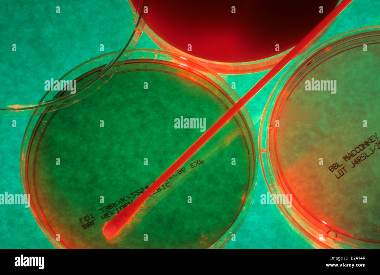 Placas de Petri utilizada para mantener el medio de cultivo sólido Imagen De Stock