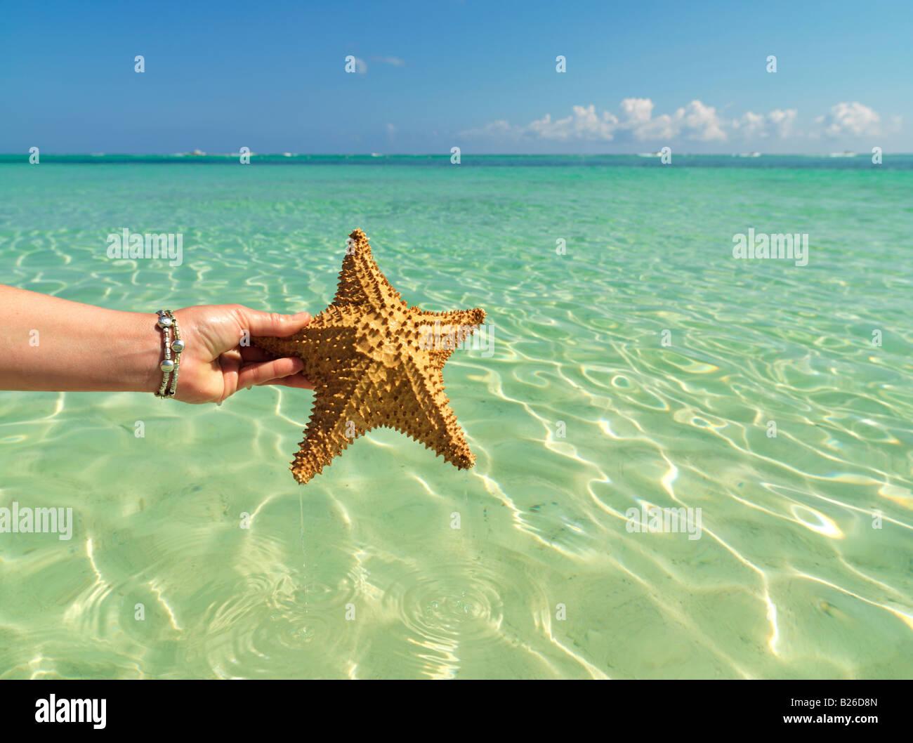 Mano sujetando starfish contra un color verde mar y cielo azul Foto de stock