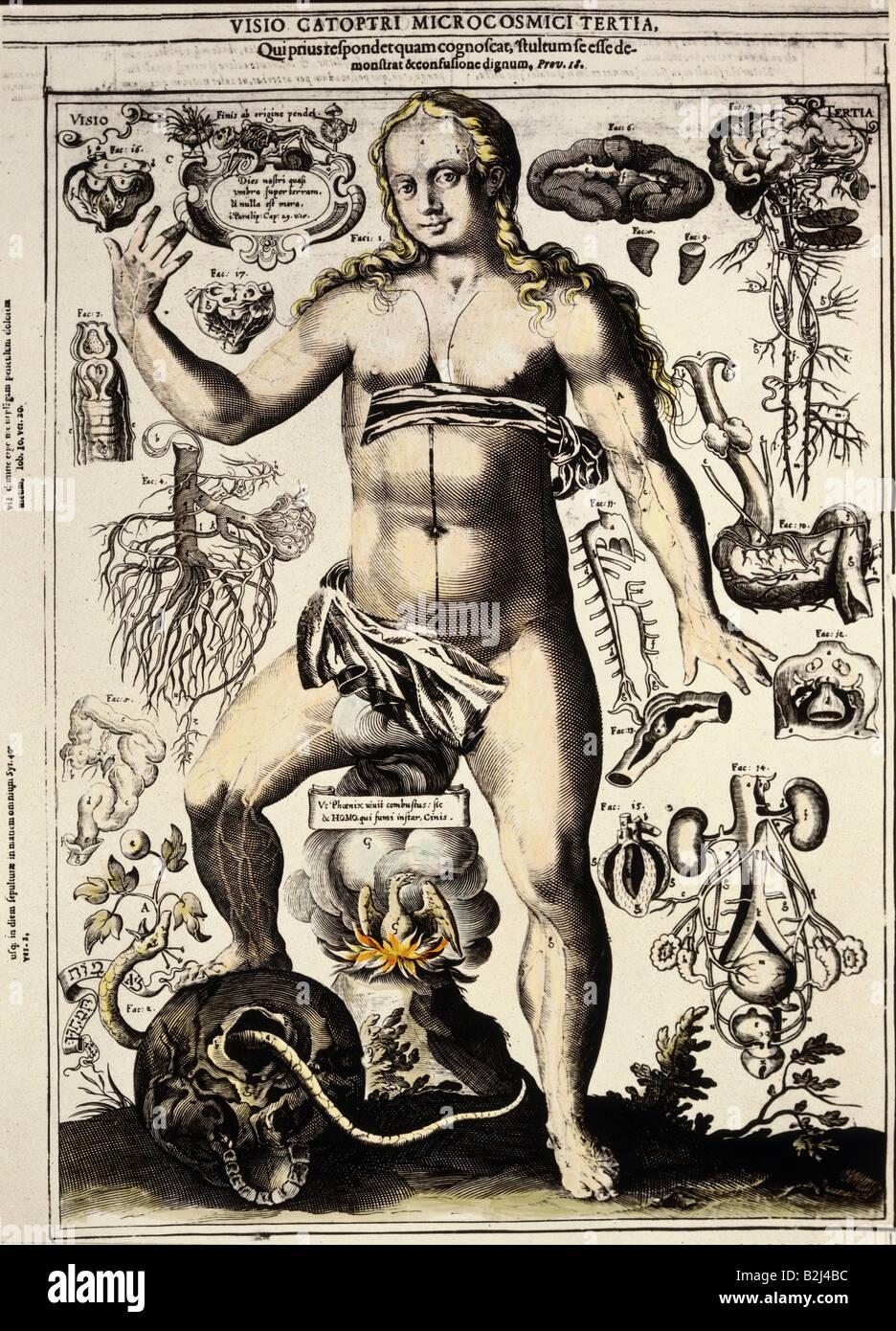 La medicina, la anatomía, el cuerpo femenino, el grabado en cobre ...