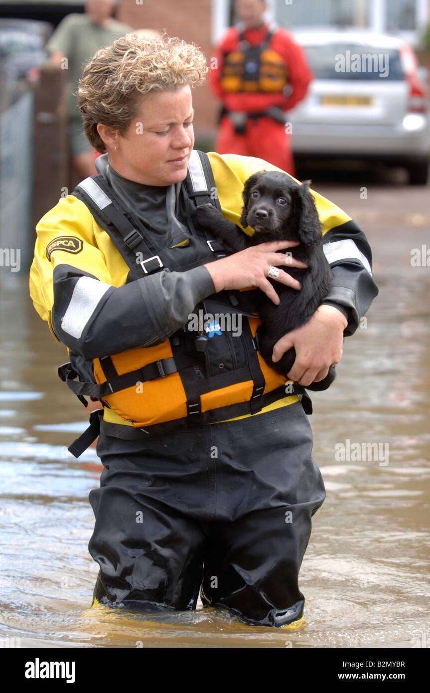Un funcionario de rescate inundaciones RSPCA LLEVA UN PERRO cruzando una calle inundada donde las casas han sido Foto de stock