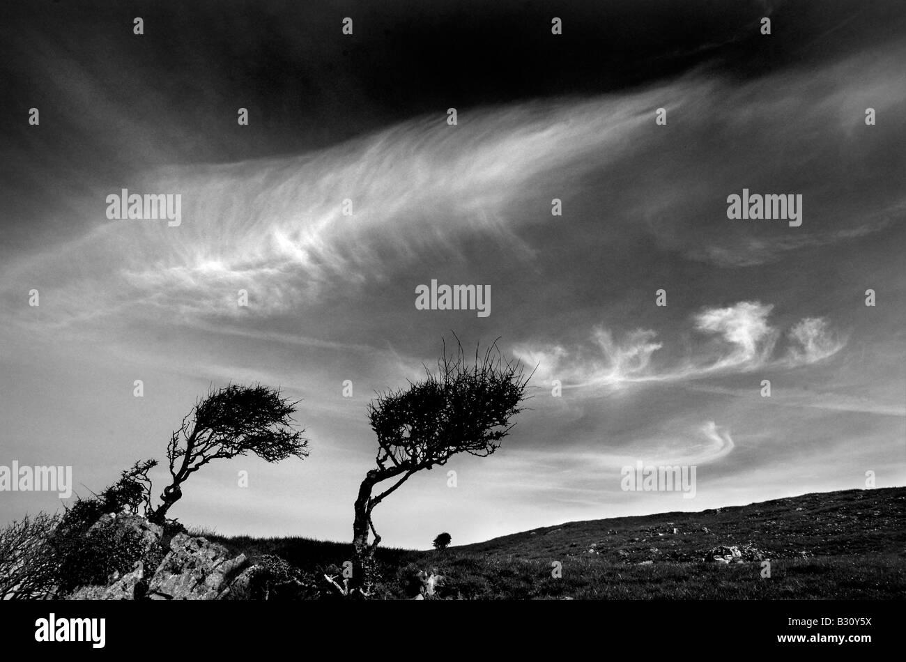 Los árboles doblados por los fuertes vientos en la Península de Gower en Gales Imagen De Stock