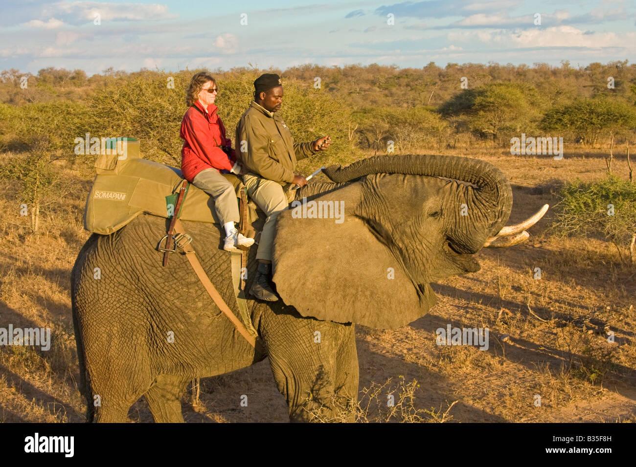 Elephant Safari ride en Camp Jabulani exclusivo juego de safari park, cerca de Hoedspruit Sudáfrica Imagen De Stock