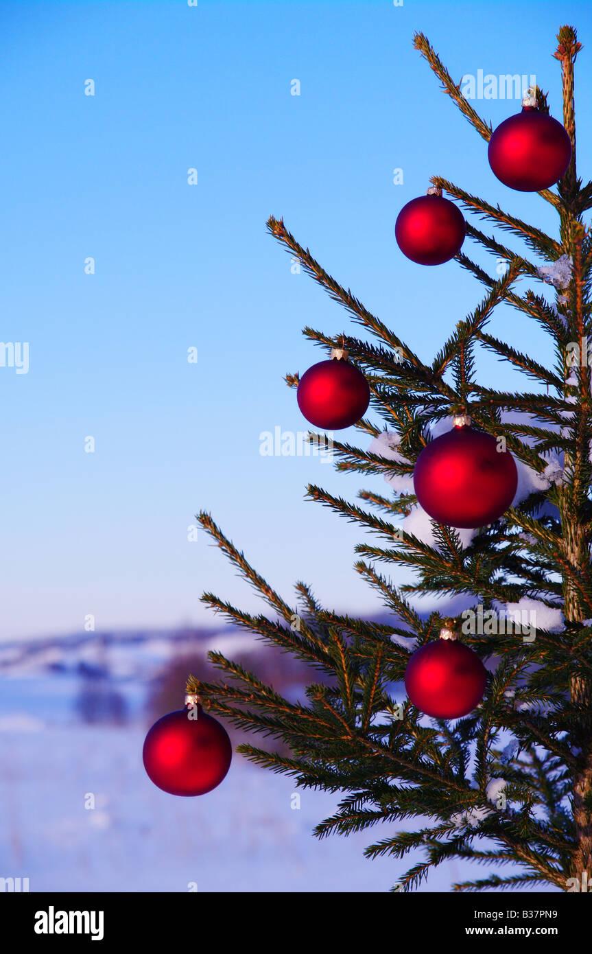 Bolas de un árbol de Navidad en el exterior, en un paisaje nevado Imagen De Stock