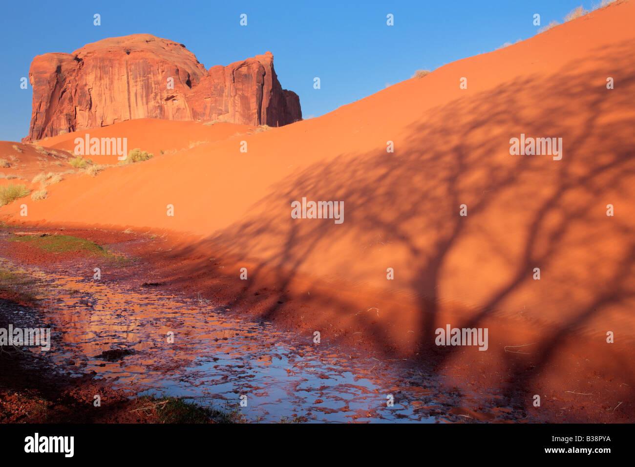 Sand Springs en Monument Valley, bajo la sombra de un árbol cercano Foto de stock