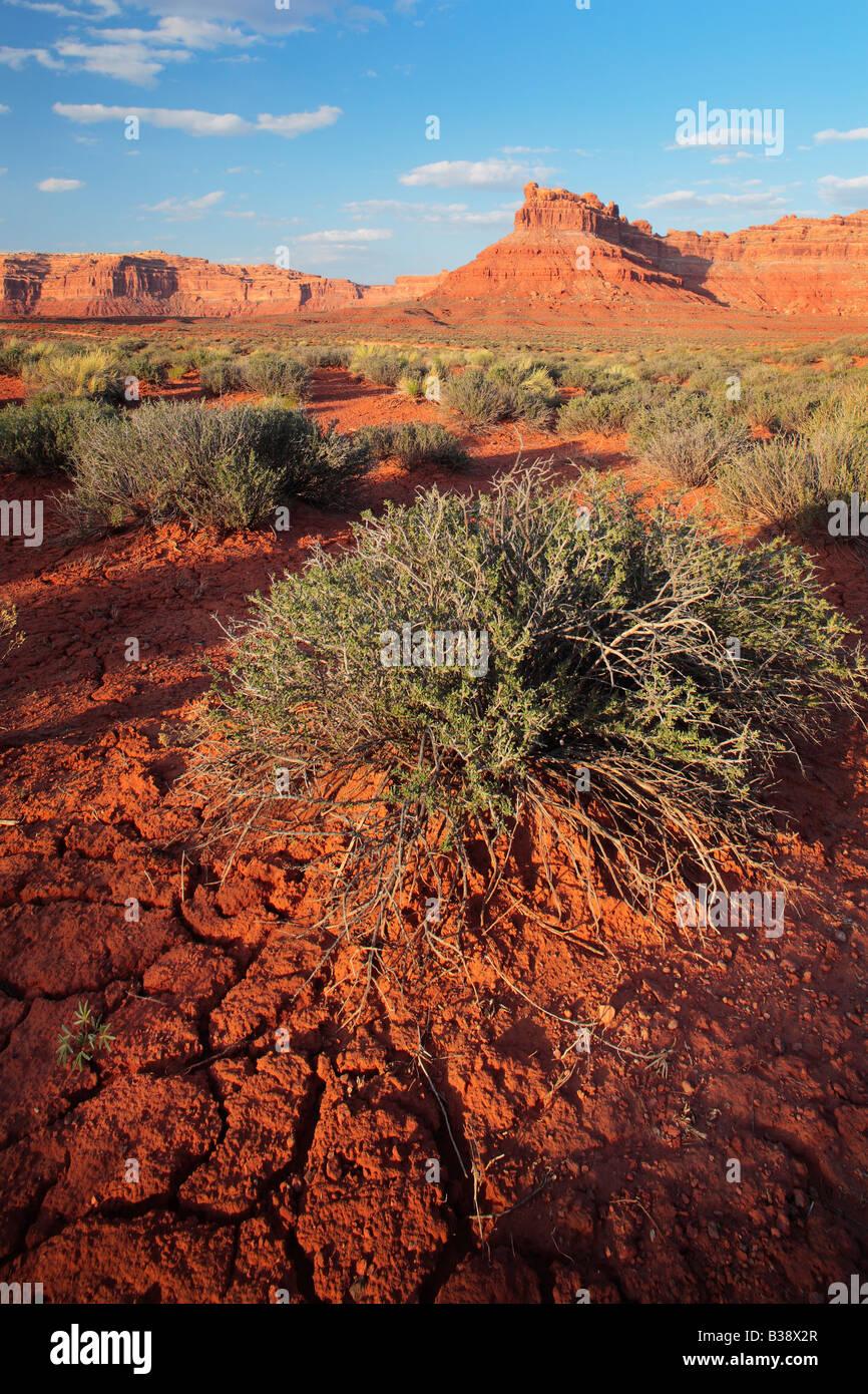 Tierra agrietada y arbustos en el Valle de los dioses, Utah Imagen De Stock
