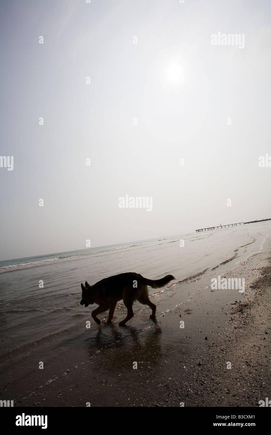 Perro en el mar Foto de stock